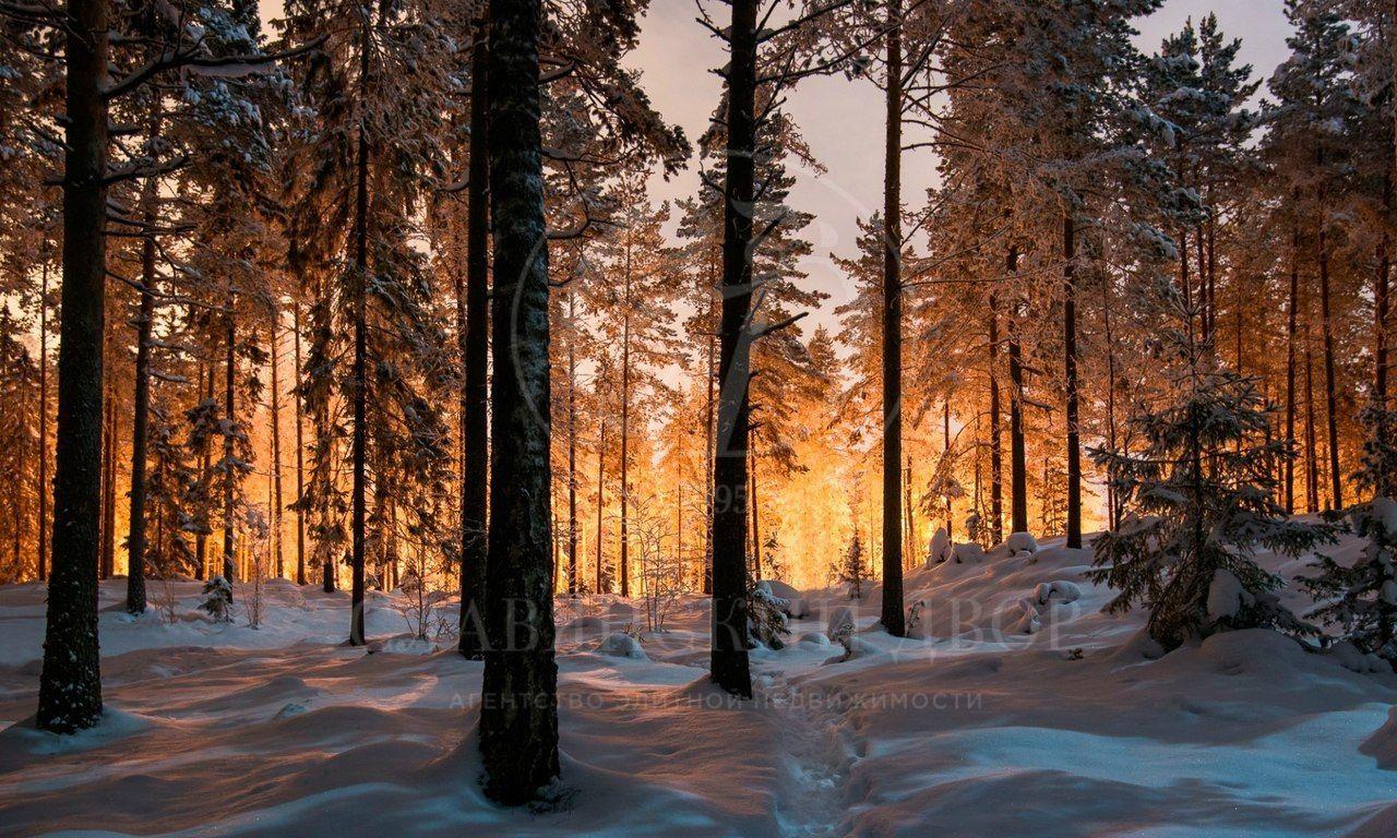 Лесной участок впосёлке «Сады Майендорф»