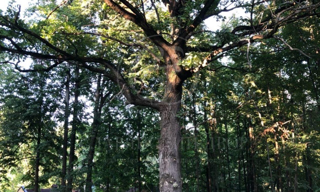 Потрясающий видовой участок свековыми дубами исоснами