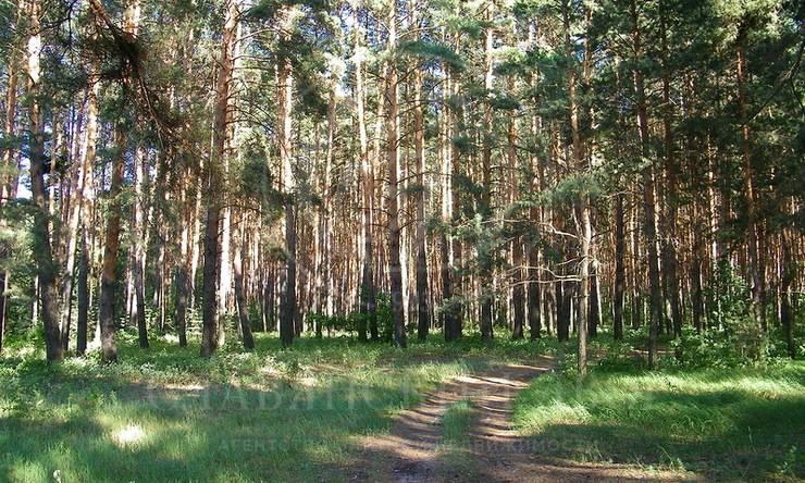 Продажа лесного участка вГорки-8