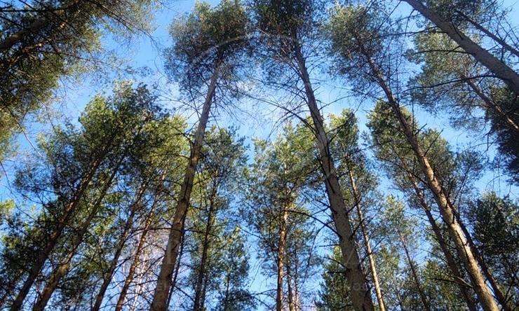 Лесной участок вДПК Новь