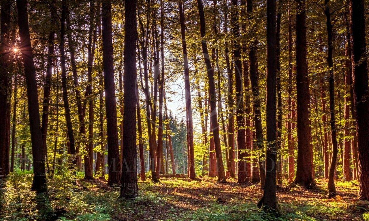 Продажа лесного участка впоселке Царское село