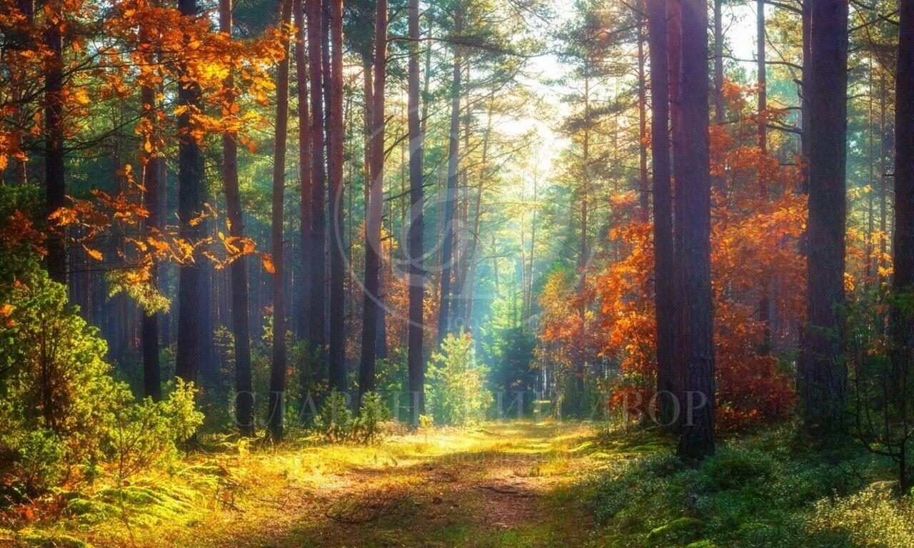 Продажа лесного участка вЖуковке