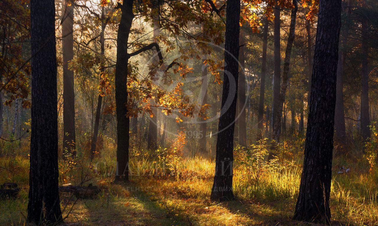Лесной участок впоселке Горки-8.Срочно!
