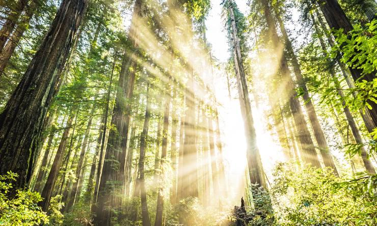 Продажа лесного участка