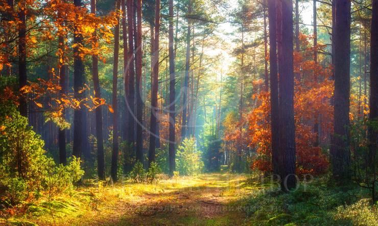 Лесной участок впоселке Новь!!
