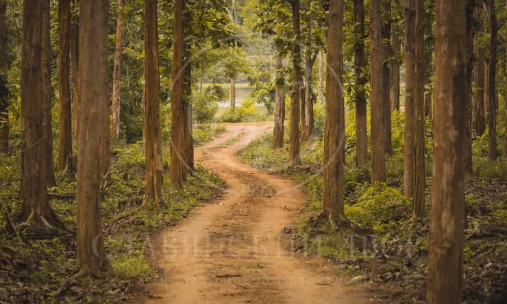 Лесной участок впоселке Балатон