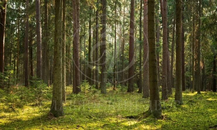 Отличный лесной участок на тупиковой улице